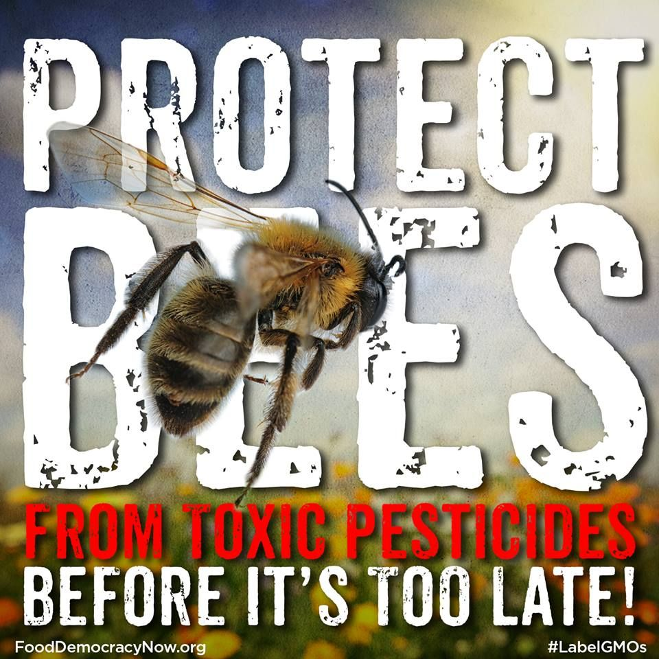 URGENT: Tell President Obama to Ban Bee-Killing Pesticides! http://action.fooddemocracynow.org/sign/take_a_stand_for_bees_BAN_beeKilling_pesticides/ #savethebees #bees #honeybees #pollinators #saveourpollinators