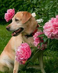 Create A Pet Friendly Garden Dog Fence Christmas Dog Costume Pets