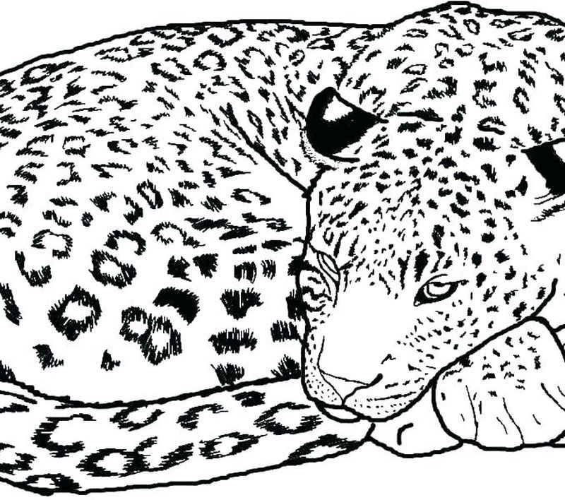 11+ Cheetah family coloring pages information