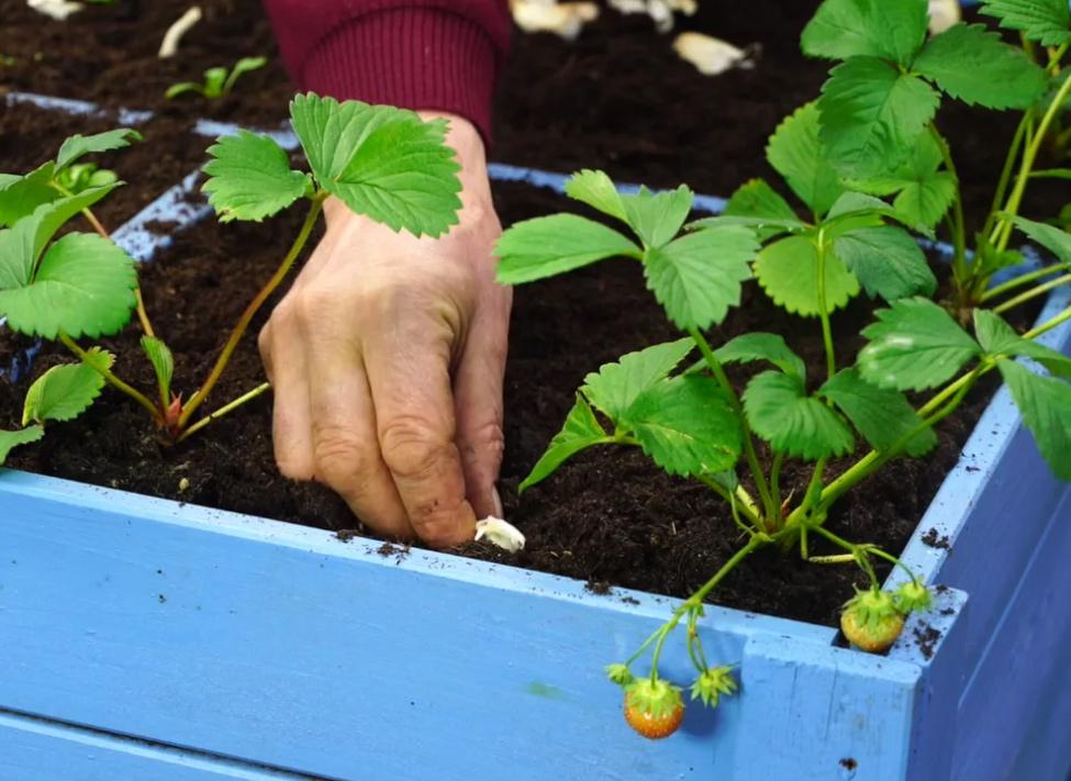 Après les récoltes d'été, que planter dans un potager
