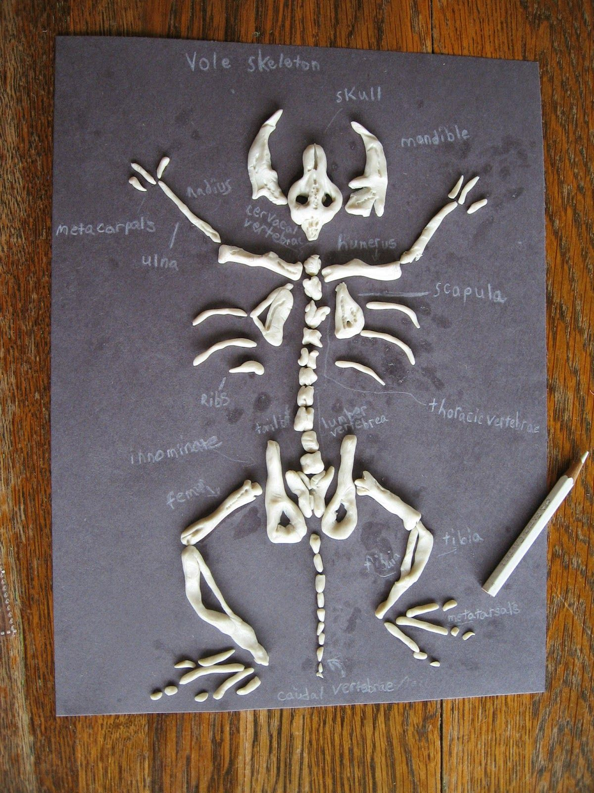 Almost Unschoolers Sculpey Clay Vole Skeletons