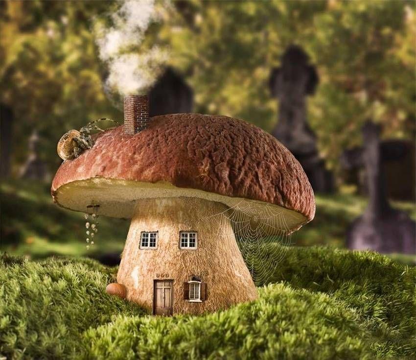домики грибы фото почта любопытнейший вид