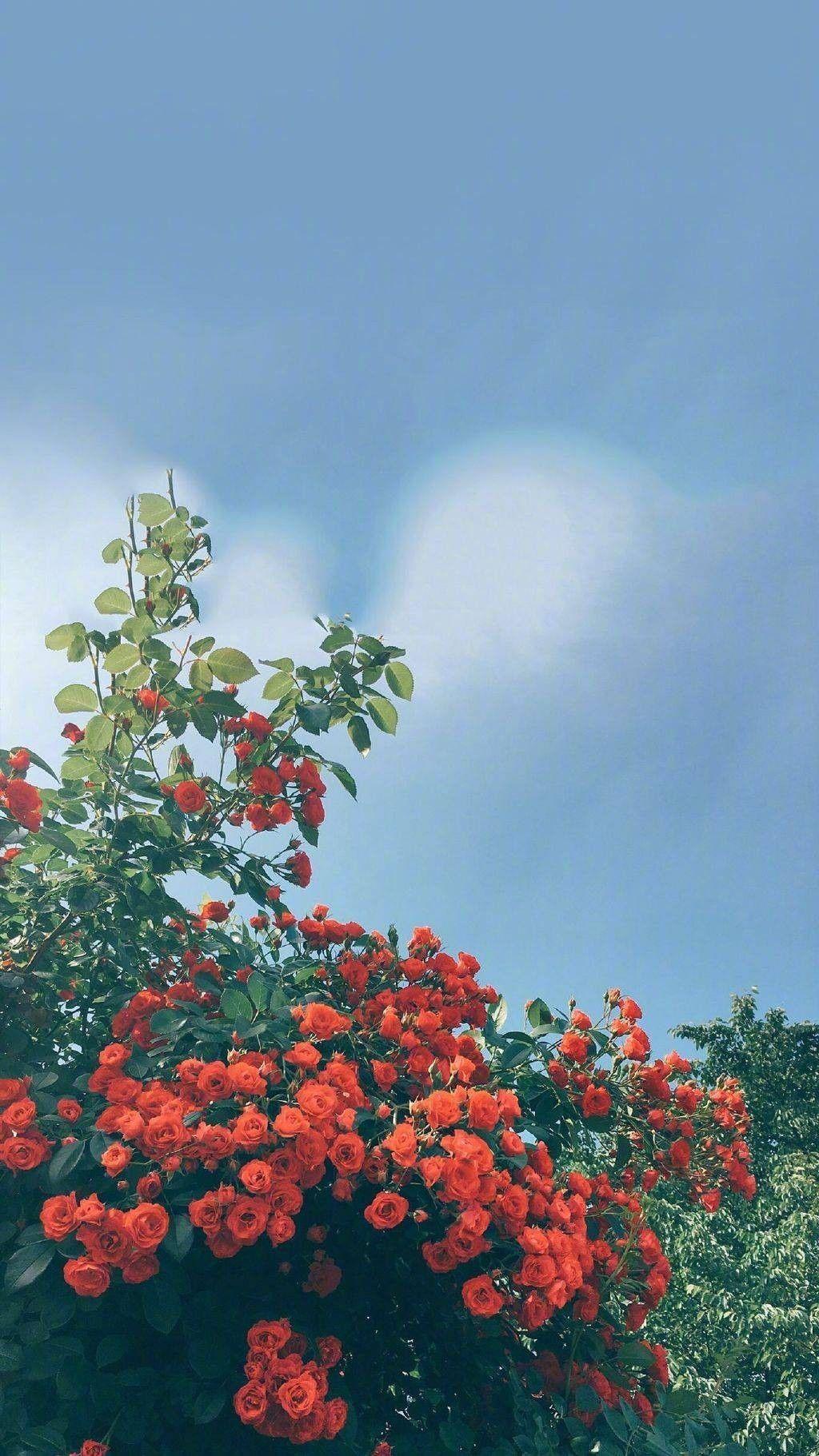 Pinterest Joyful Grace Aesthetic Iphone Wallpaper Flower