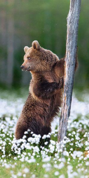BEAUTIFUL BEAR SHOT
