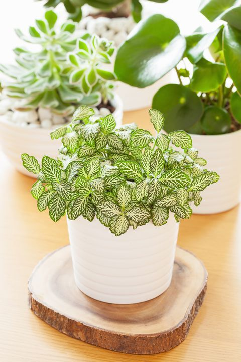 These 30 Indoor Plants Are Almost Impossible to Kill