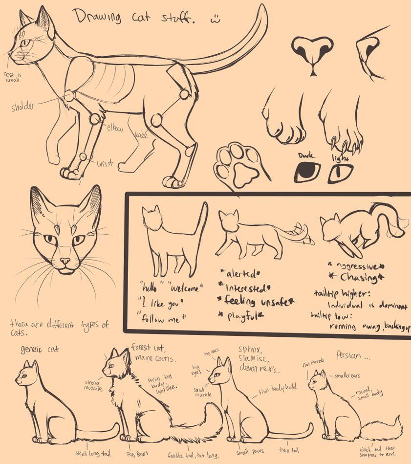 How To Draw Swiftpaw By Dawn With Images Warrior Cat Drawings