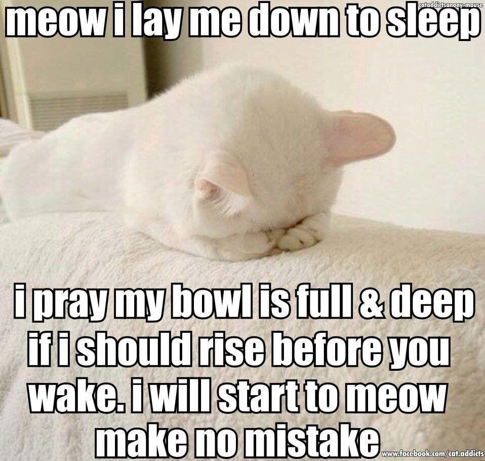 Meow I lay me down to sleep I pray my bowl is full & deep If I