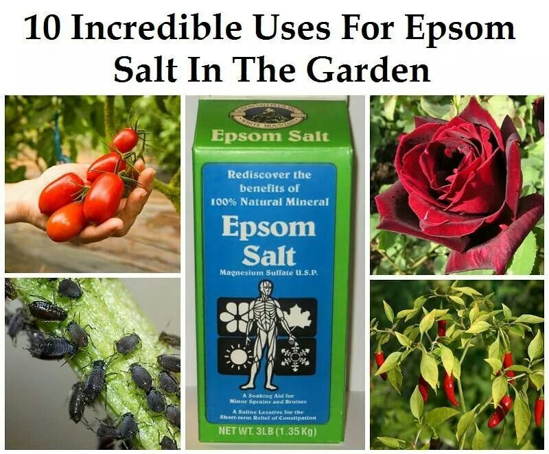 Epsom Salt In The Garden Plants Lawn Garden Epsom