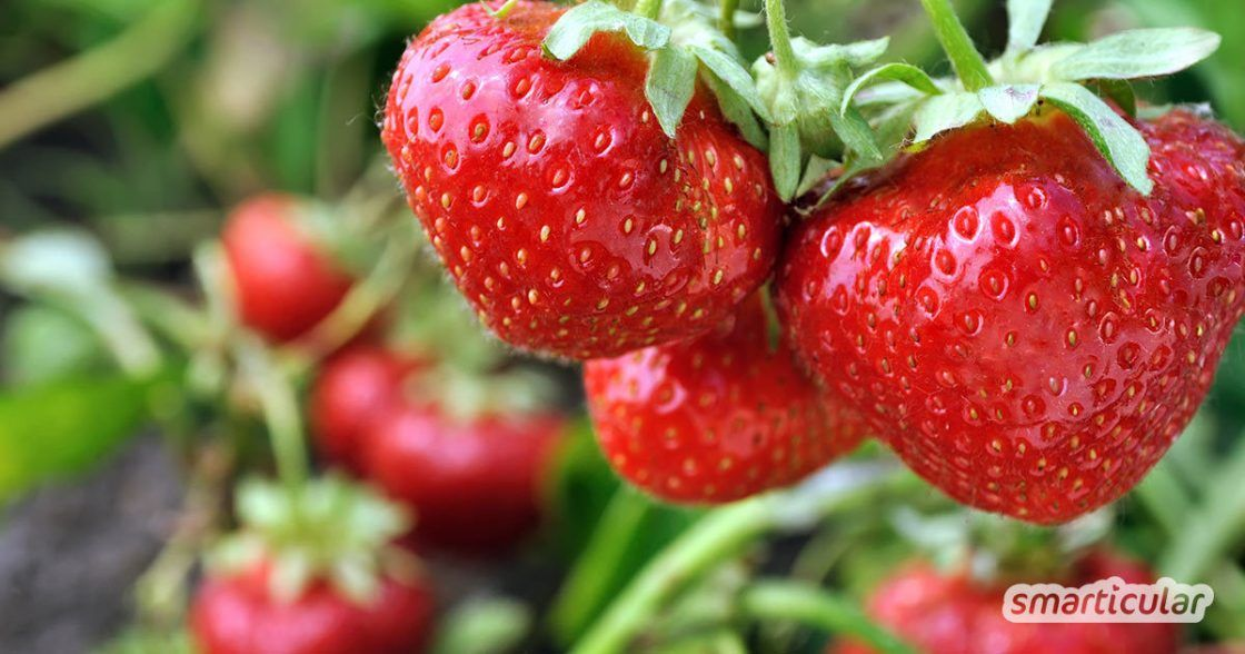 Die besten Pflanzen für Gartenanfänger: Gemüse, Kräuter und Blumen