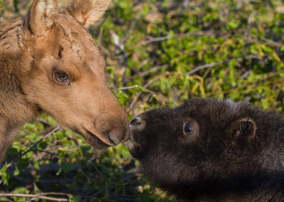 Alaska Wildlife Conservation Center (With images