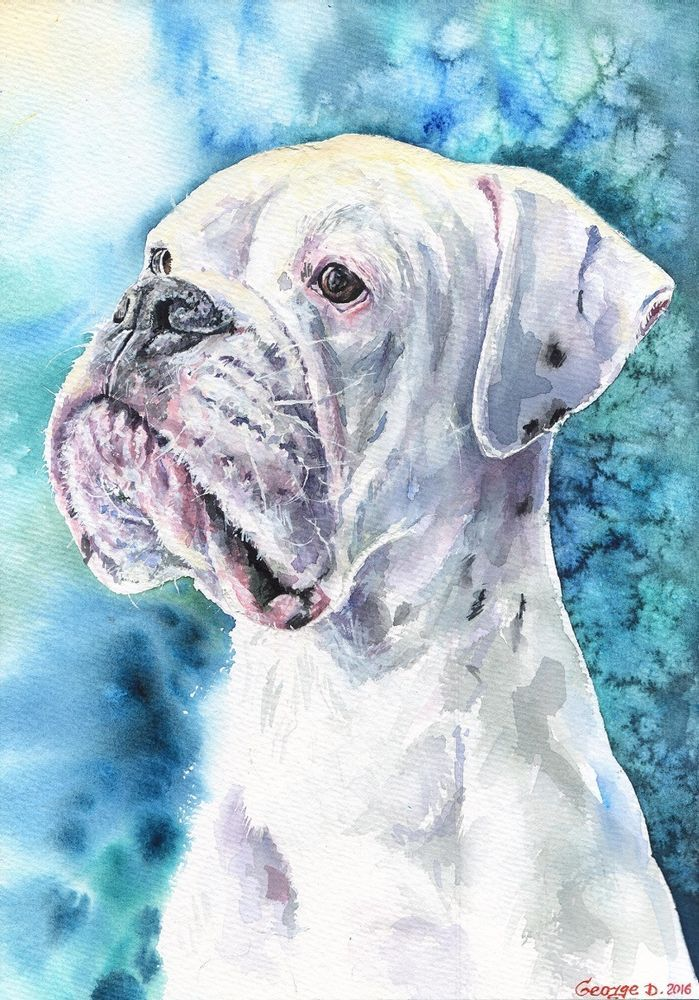 White Boxer Print Of The Original Watercolor Painting Christmas