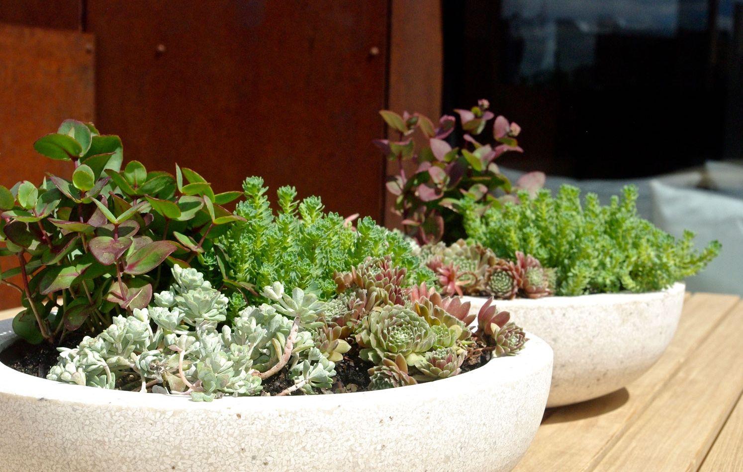 Williamsburg, Brooklyn Rooftop Garden, modern design, sedum and succulent bowls, DWR table