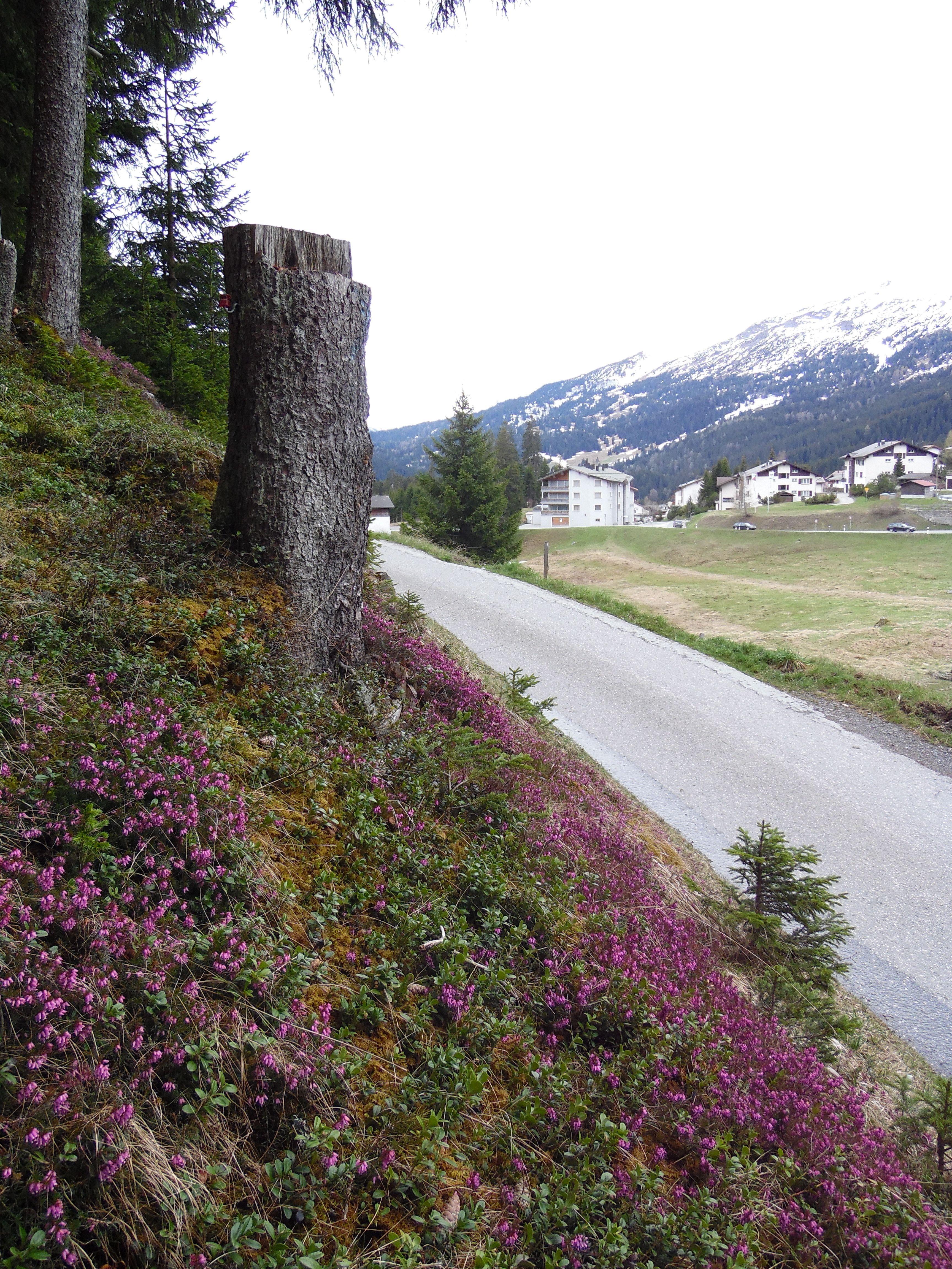 Die Lenzerheide wird zu Recht als Wanderparadies bezeichnet. Entdecke die schönsten Plätze in der herrlichen Natur der alpinen Hochebene.  www.hotelauszeit.ch www.facebook.com/hotelauszeit www.instagram.com/hotelauszeit