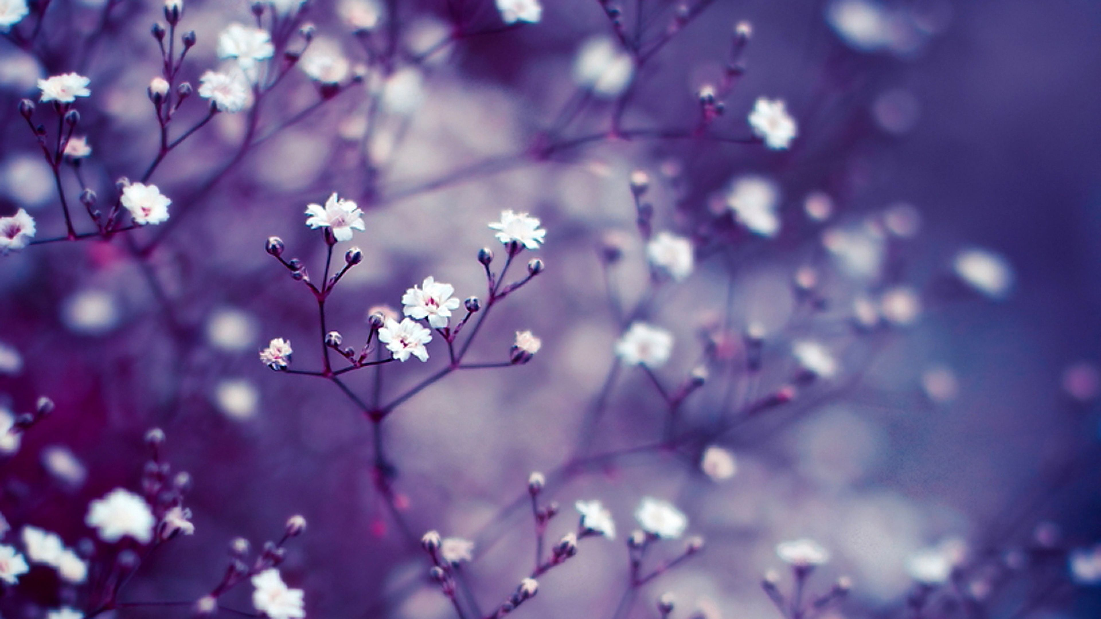 Flowers Background | HD Background Point | flowers ...