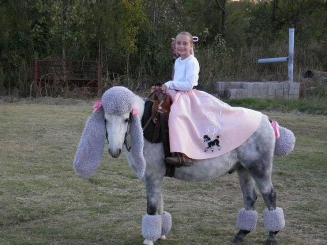 Distractify | 26 Creatively Costumed Horses Who Are Masters Of Disguise