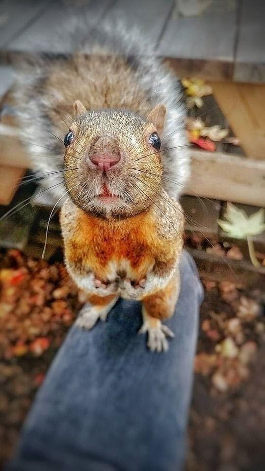 Pin by Gabi on eichhörnchen   Cute animals, Animals, Funny