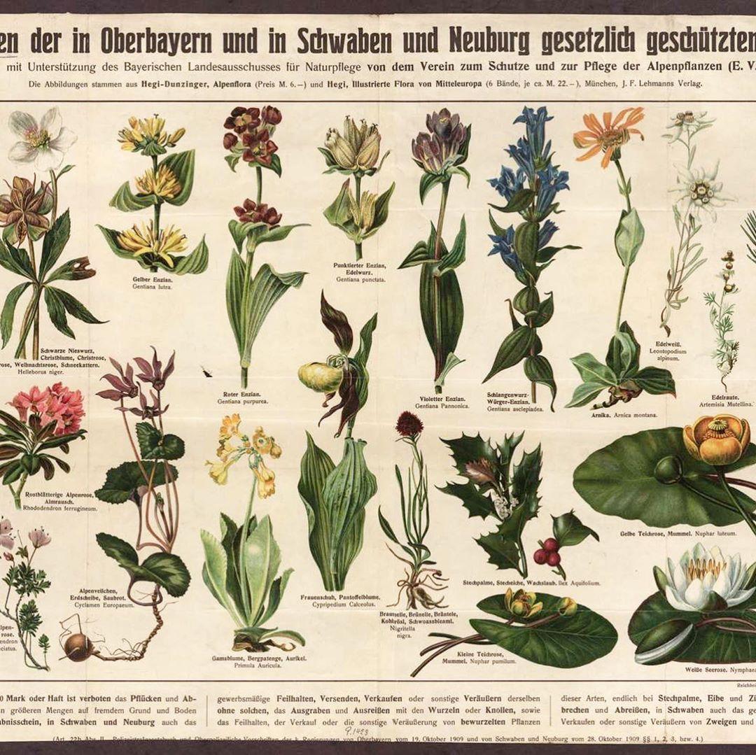 Pflanzenschutzplakat 1910 In 2020 Blumen Kunst Schone Blumen Blumen