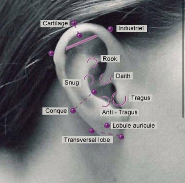 All different types of ear piercing's | Ear piercing's | Pinterest
