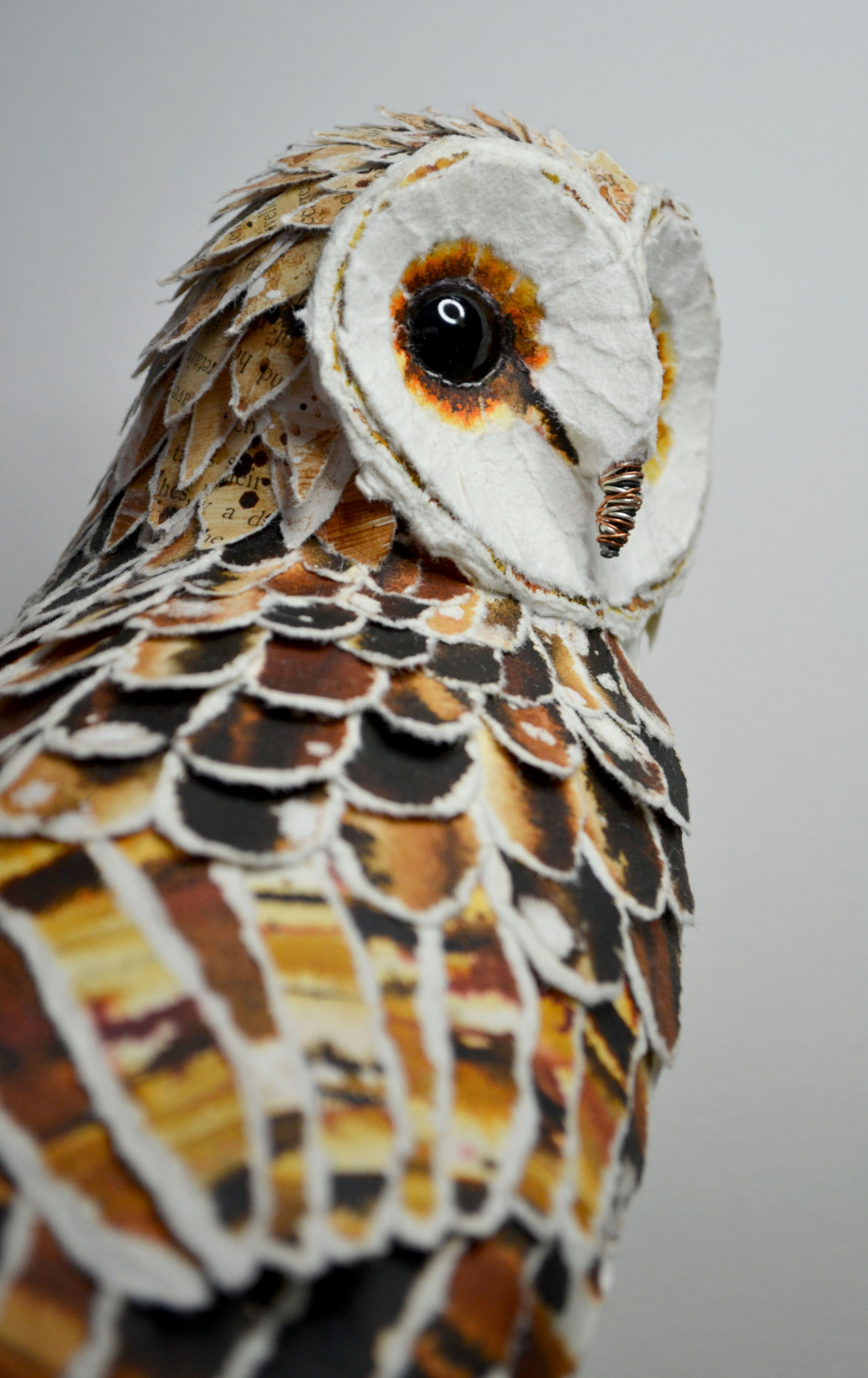 barn owl essay African lion safari is a family-owned safari park in southern ontario,  eurasian eagle-owl, barn owl, spectacled owl, great horned owl, burrowing owl,.