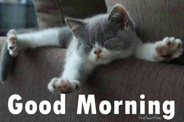 Good Morning Quotes Quote Morning Kitten Good Morning Morning Quotes Good Morning Quotes Cats Kittens Cutest Kittens
