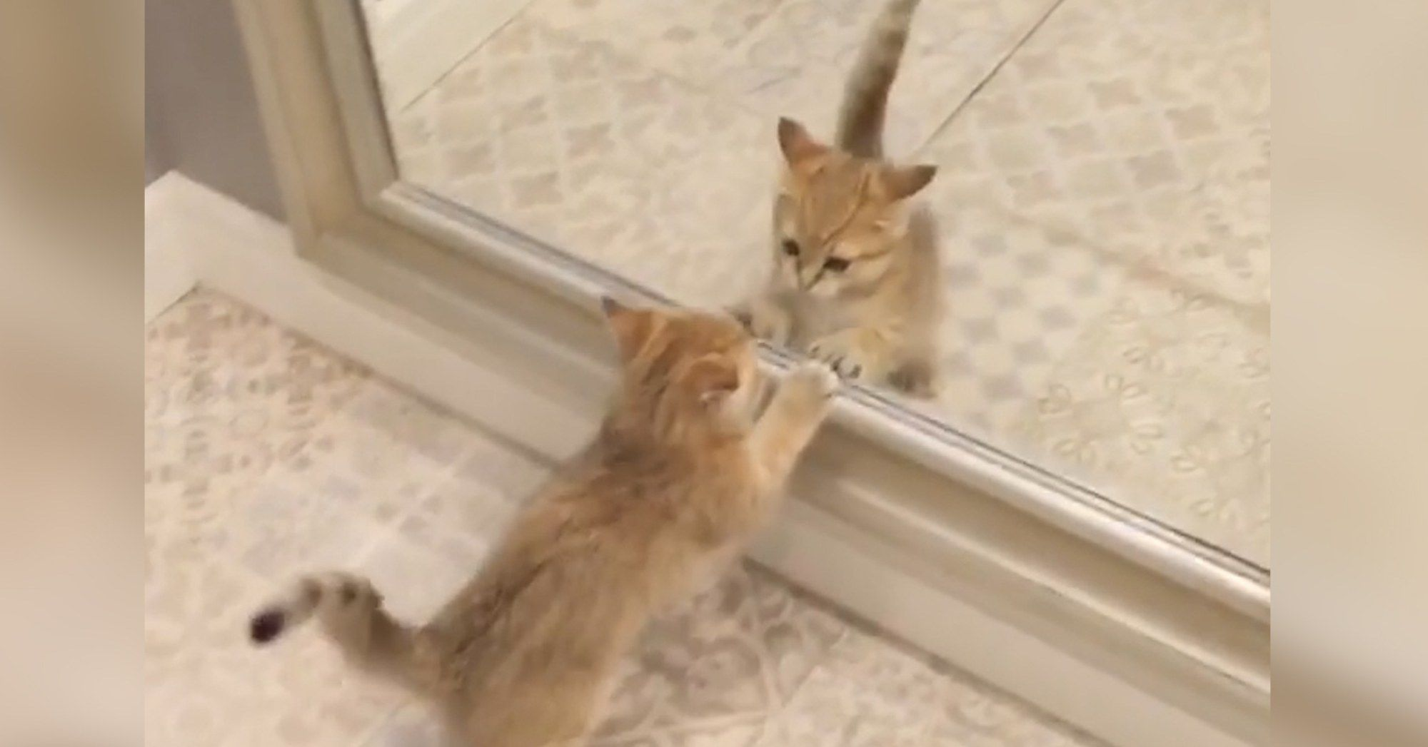 Kitten Cannot Believe There S Another Cat In The Mirror Kitten Cats Animal Lover