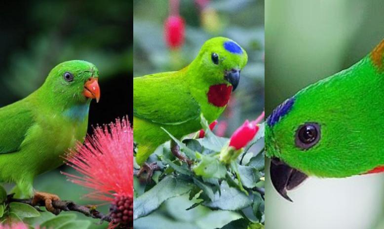 Download Kumpulan Suara Burung Serindit Mp3 Untuk Masteran Burung Burung Kecil Burung Kolibri