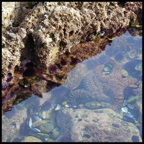 Tide Pools In San Clemente Ca Laguna Beach California Tide Pools Oceanside California