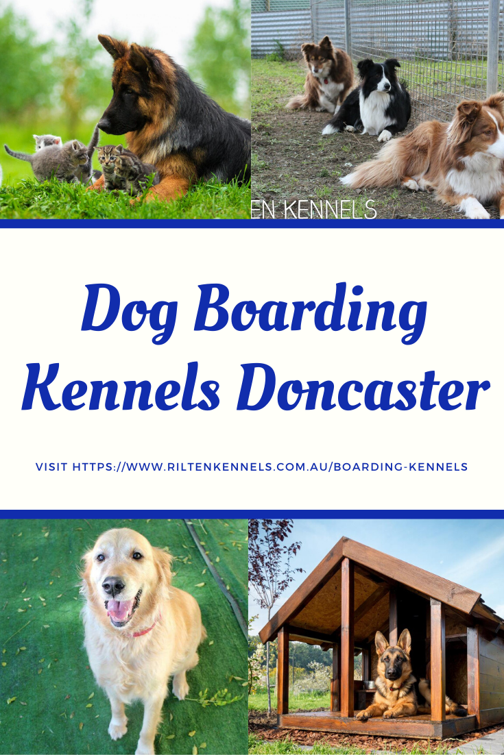 If you are finding a best dog boarding kennel in Doncaster ...