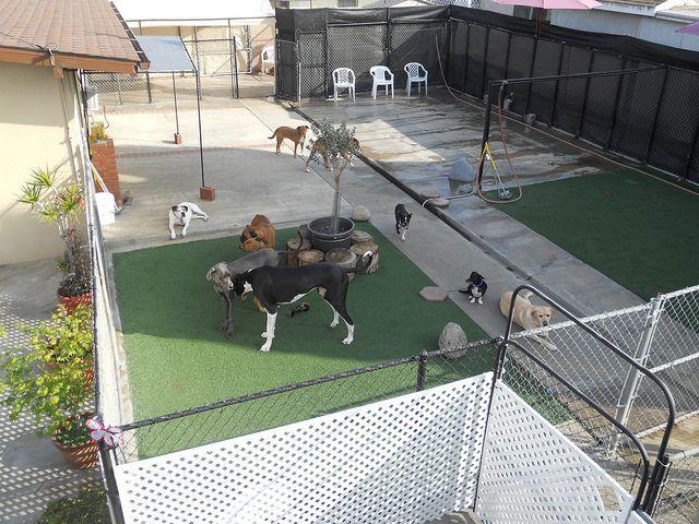 The Dog Park Inn Backyard Dog Park Dog Boarding Dogs