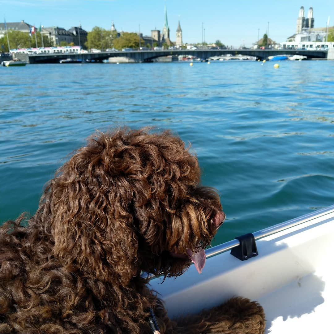 Today I Discovered Zurich By Boat And Again I Had A Lot Of Fun