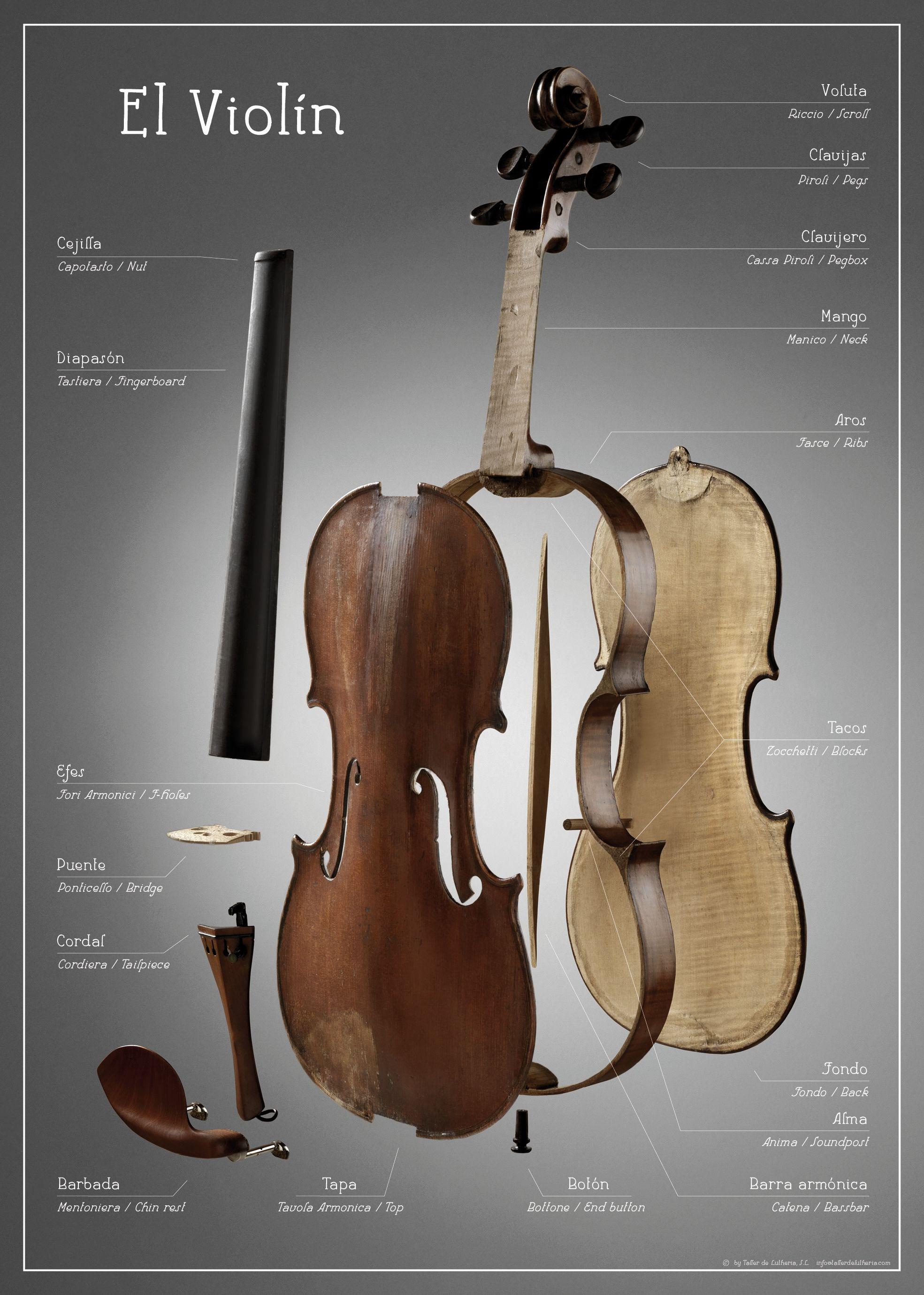 Poster Anatomía del violín | Luthier | Pinterest | El violin ...