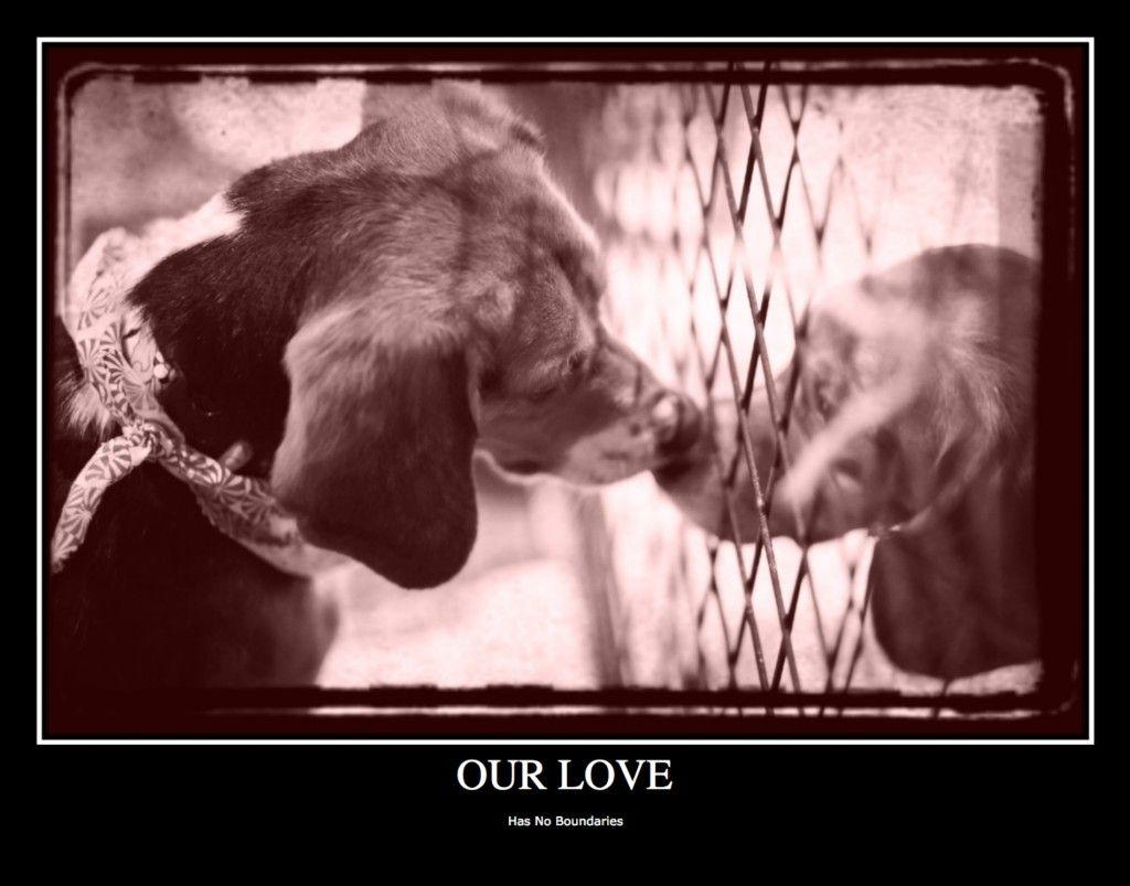 Valentine S Day Ecard Beagle Freedom Project Beagle Freedom