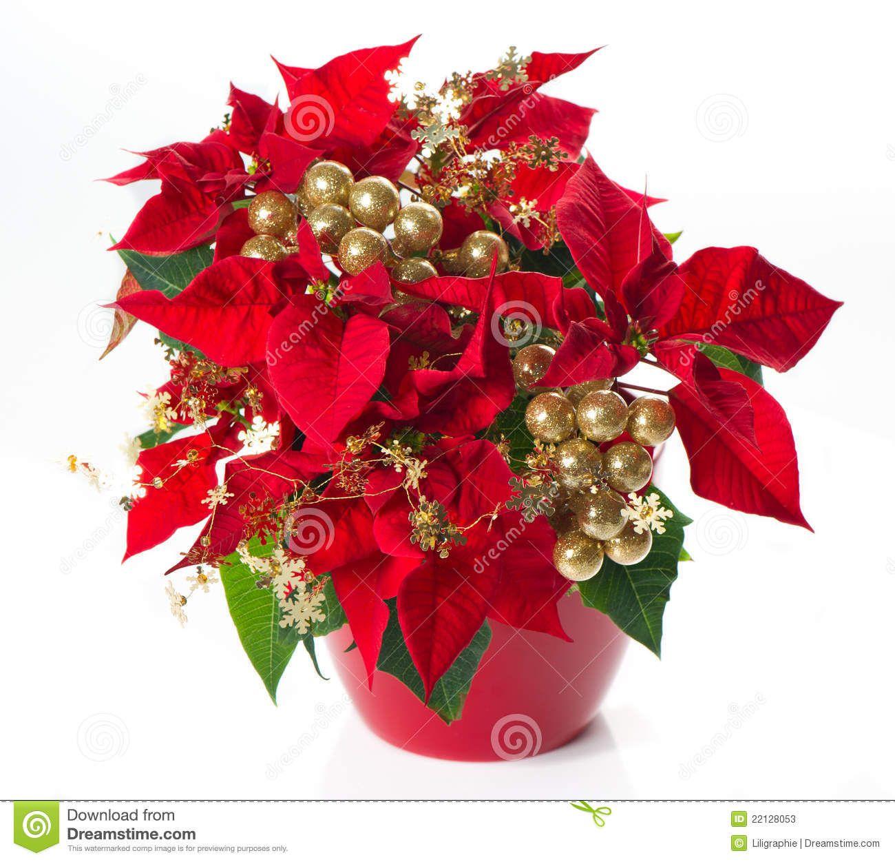 Red Poinsettia Christmas Flower Golden Deco 22128053g 13001251