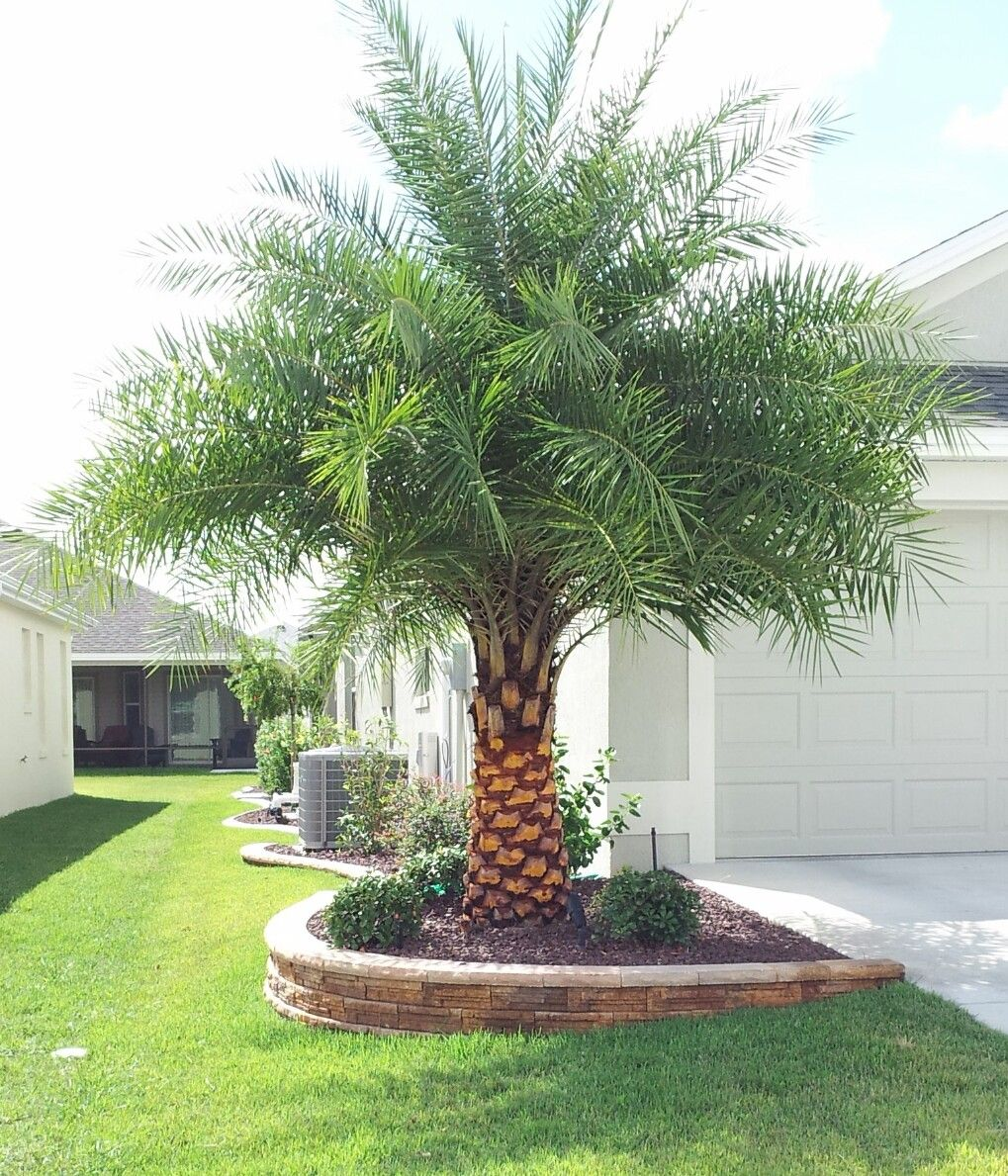 Palm Tree Landscape Palm Trees Landscaping Small Palm Trees