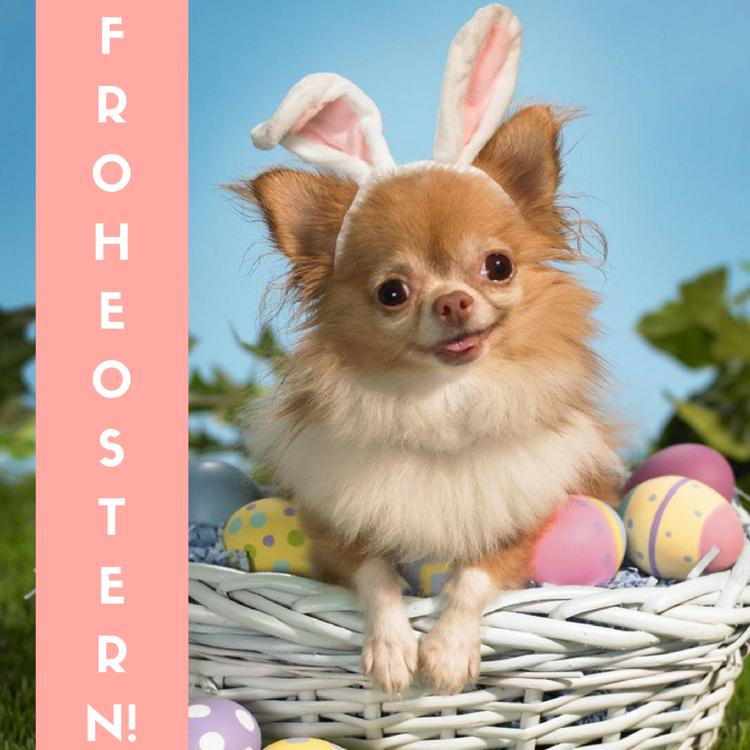 Frohe Ostern Bilder Lustig Kostenlos Chihua Hund Easter Spring Happy Frohe Ostern Bilder Ostern Bilder Kostenlos Ostern Bilder