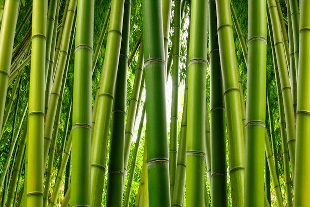 Best Come Costruire Un Muro Di Bambù Bamboo Wall Murals Your 400 x 300