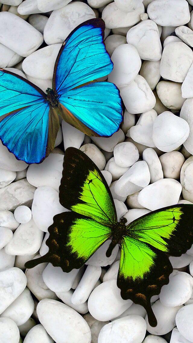 Https Itunes Apple Com Us App Khlfyat Ayfwn Edition Id866817739 Mt 8 تطبيق خل Butterfly Wallpaper Butterfly Wallpaper Backgrounds Blue Butterfly Wallpaper Full hd butterfly stone wallpaper