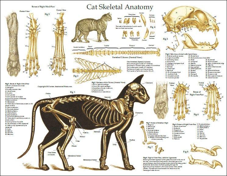 Gratis Malvorlage Katzenpfoten In Beliebt06 Diverse Malvorlagen Zum Ausdrucken Und Ausmalen Katzen Pfoten Katzenpfoten Malvorlage Katze