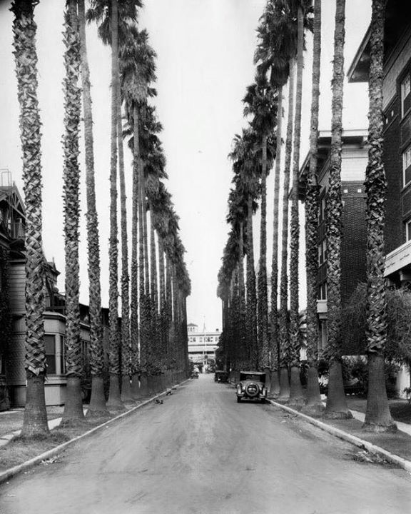 Palm Drive North From Adams Boulevard Ca 1930 The Building At The End Of The Street Is The Los Angel California History Los Angeles Hollywood City Of Angels
