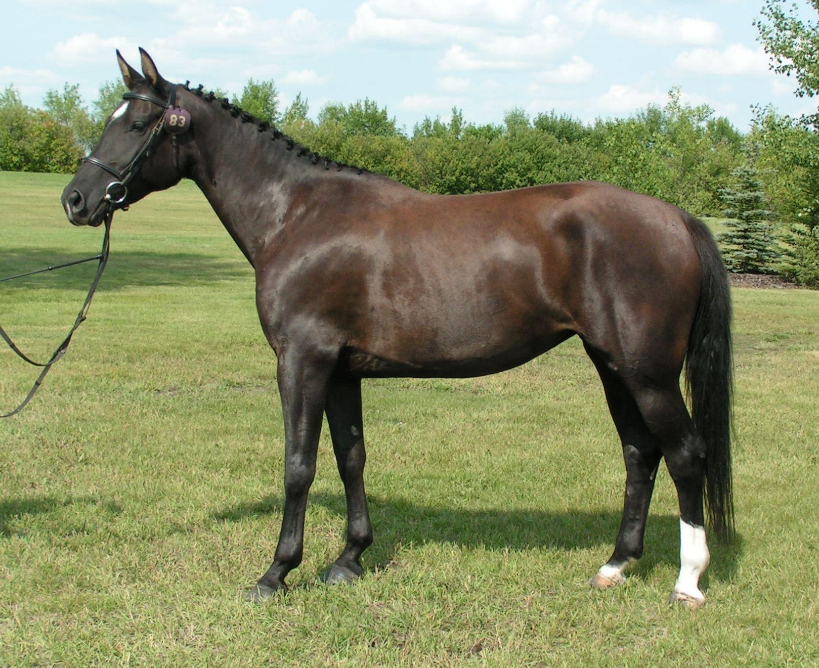 Karabakh Horse Azerbaijan National Animal National Animal Horses Horse Pictures [ 1321 x 1619 Pixel ]