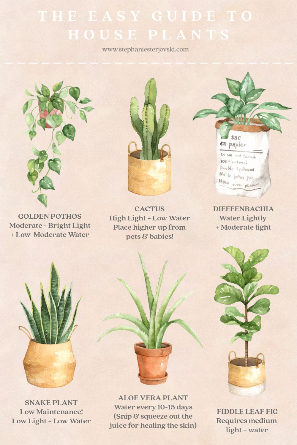 An Easy Guide to House Plants #easyhouseplants