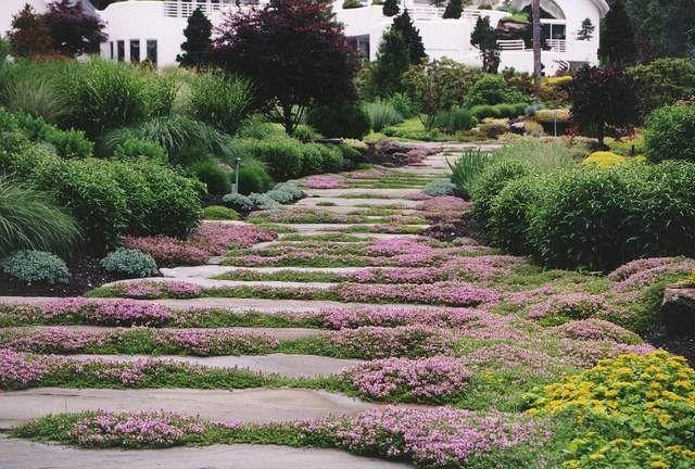 Plantas tapizantes, rastreras o cubresuelos | Caminos, Naturaleza y ...