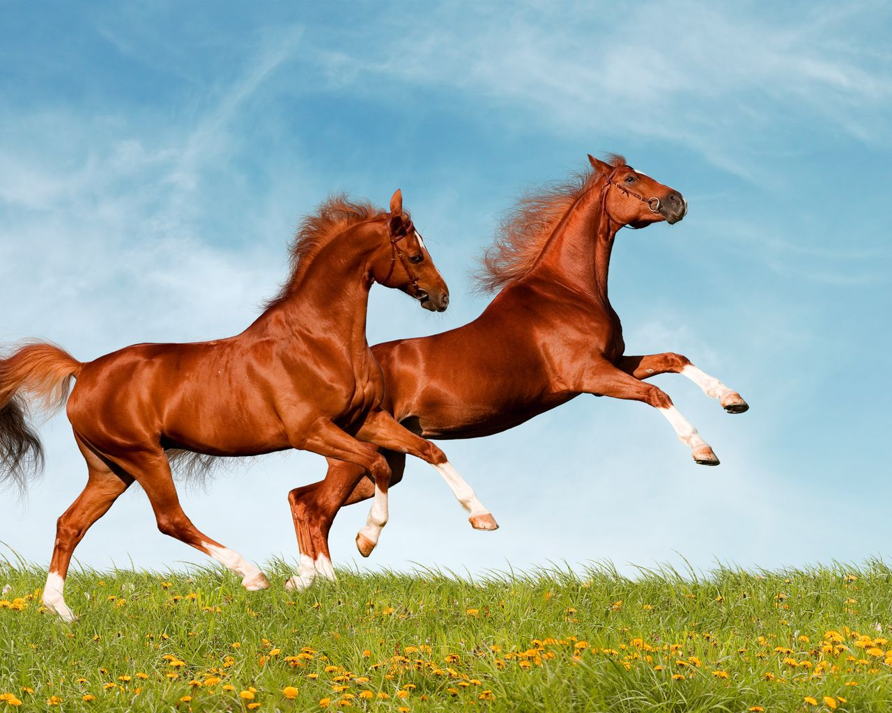 Fondos de Pantalla Fondo de pantalla de caballo