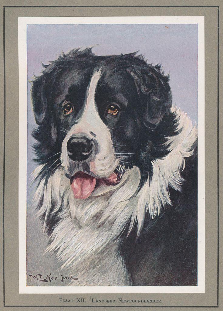 Más tamaños | pl XII Onze honden | Flickr: ¡Intercambio de fotos!