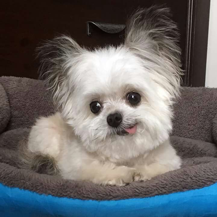 Norbert Puppies Cute Dogs Cute Baby Animals