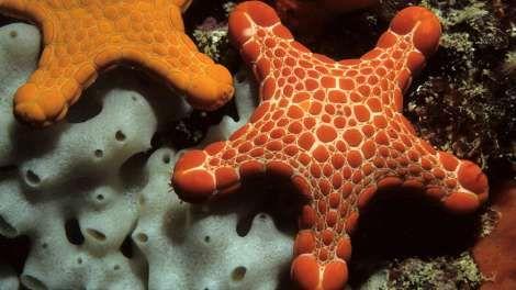 Examples Of Echinoderms Sea Sponge Echinodermata Echinoderms
