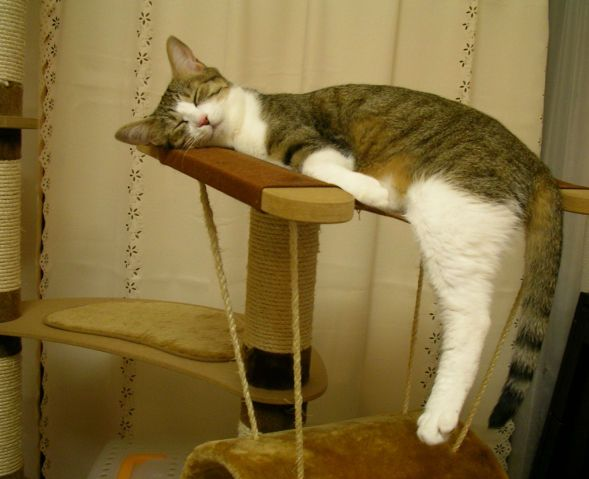 猫(='ω'=)