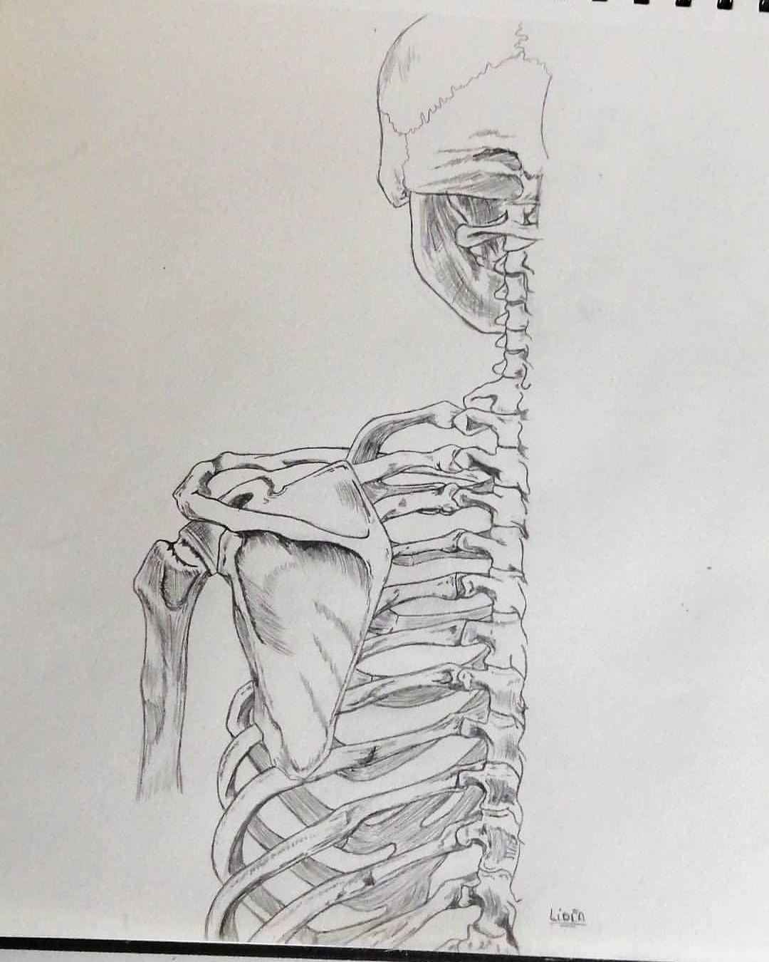 Esqueleto Humano Esqueleto Humano Esqueleto Dibujo Esqueleto