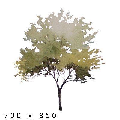 Textur Andere Aquarellelemente Pflanzen - Ansichten #architektonischepräsentation