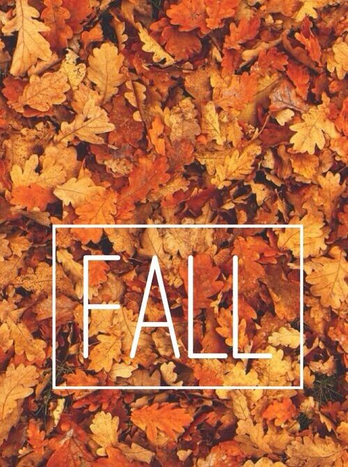 Free Fall Wallpapers With Pumpkins